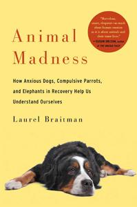 animal-madness