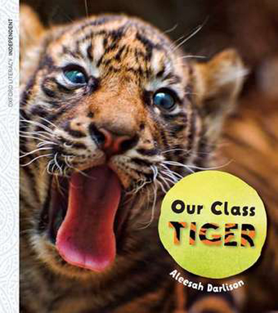 our-class-tiger