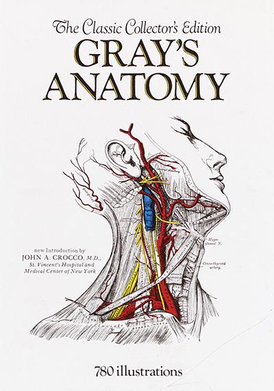 grays-anatomy-400