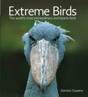 extreme-birds