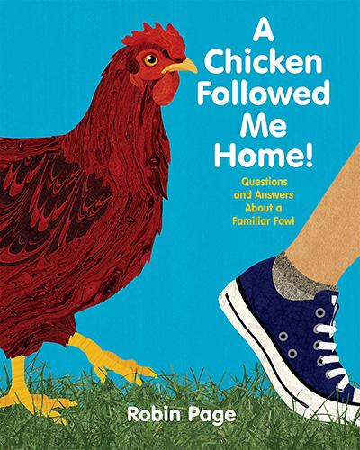 a-chicken-followed-me-home