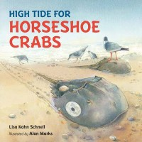 high-tide-for-horseshoe-crabs