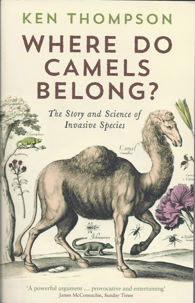 where-do-camels-belong