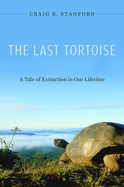 last-tortoise