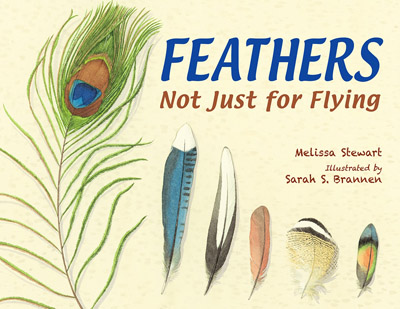 feathers-not-just-for-flying