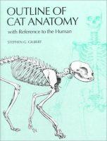 outline-of-cat-anatomy